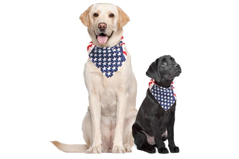 USA Dog Bandana Large American Flag Bandana American Flag Dog Bandanas for Dogs Bandanas for Dogs Large Medium or Small Dog Collar Bandana Puppy Bandana American Dog Bandana